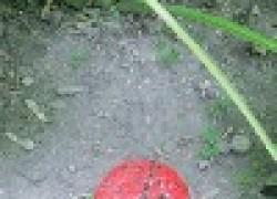 Поселите жучков-паучков на участке