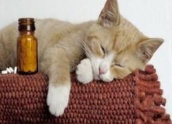 Какие человеческие лекарства нельзя давать домашним животным