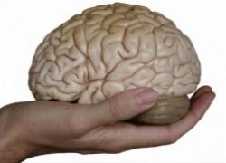 Эффективность работы мозга