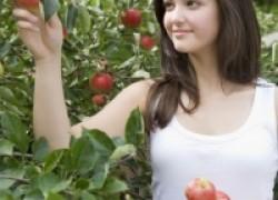 Сорта яблони для Черноземья