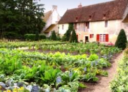 Соблюдаем севооборот и получаем на 25% больше урожая