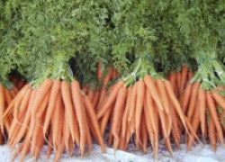 Кто мешает моркови расти