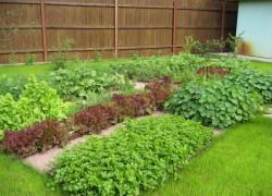 Растения и магнитное поле Земли