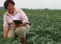 Особенности удобрения капусты