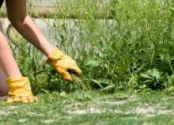 Определение типа почвы по сорнякам
