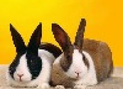 Беда с кроликами