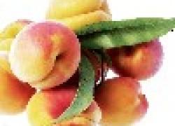 Устойчивые абрикосы