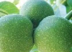 Вопросы о грецких орехах