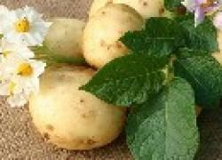 Готовим удобрения для картофеля