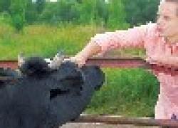 Андрей Соколов: мечтаю купить дачу с коровой впридачу