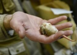 В Московском зоопарке тушканчиков посадили в холодильник