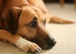 Деликатные проблемы у собаки