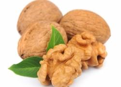 Как вырастить орех из свежих плодов