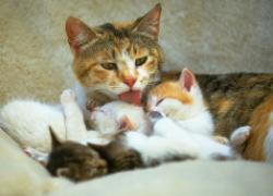 Радости кошачьего материнства