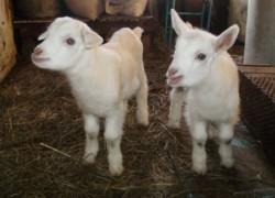 Домик для козы