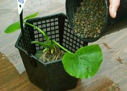 Можно ли пересаживать растения летом