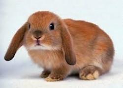 Почему дерутся кролики
