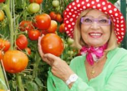 Рецепты засолки помидоров и огурцов от Октябрины Ганичкиной