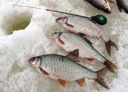 Прикармливание рыбы в зимнюю пору обязательно