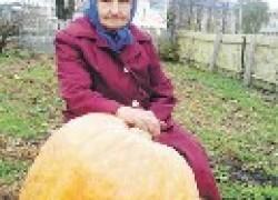 Как вырастить тыкву-гигант
