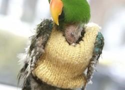 Попугай нервничает