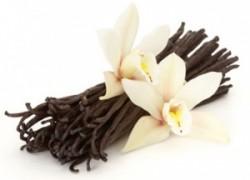 Ванильная орхидея: уход и размножение