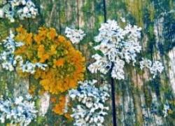 Плесень на деревьях