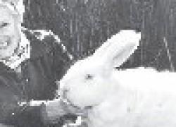 Почему выгодно разводить кроликов