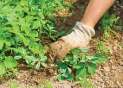 Какую пользу приносят сорняки