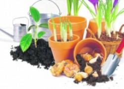 Урожайные смеси для рассады