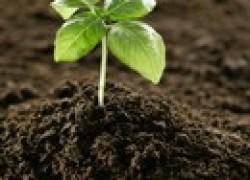 Сапропель повысит плодородие