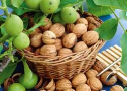 Создаем ореховый сад: и польза, и выгода в одном