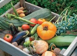 Что влияет на урожай овощей?