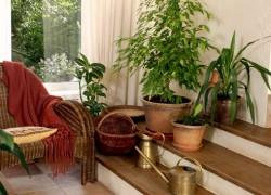 Домашние растения: для лечения, для питания, для души