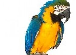 Опасности, подстерегающие птицу в наших домах и квартирах