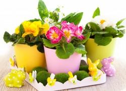 Вредители комнатных цветов и способы борьбы с ними