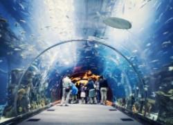 Можно ли не ухаживать за аквариумом