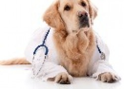 Диагностика по-собачьи