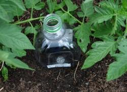 Капельный полив при помощи... бутылки пвх