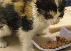 Как спасти котенка
