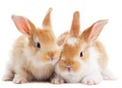 Мои любимые кролики