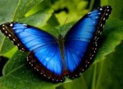 Дом украсят... бабочки