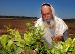 Садоводство в Израиле
