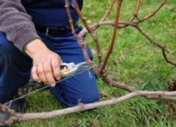Для чего нужно формировать грозди