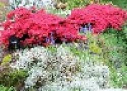 Сады камней и растений