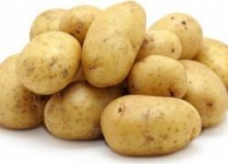 Оздоровленный картофель собственной селекции даже на небольшом огороде!