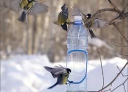 Подкормка птиц