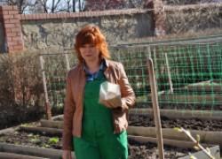 Посев сидератов в почву. ВИДЕО