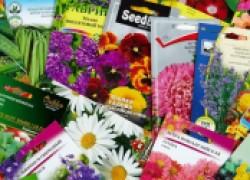 Что лучше: покупать семена или выращивать самим?