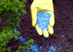 Как накормить свой сад